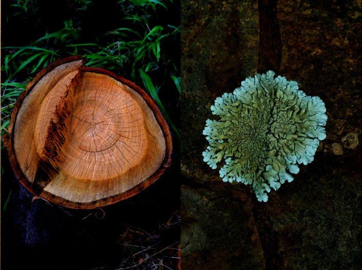 Cut Tree & Liken - Keep Silent