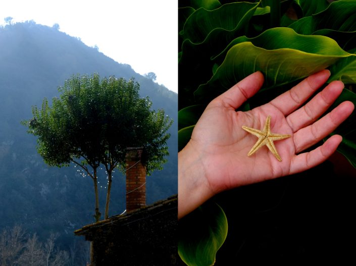 Roof Tree & Star Hand - Keep Silent