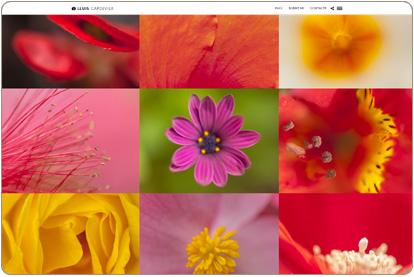 Lluis Capdevila - Fotografías de flores
